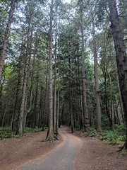 Colliery Forest (stephenwilley) Tags: vancouverisland nanaimo forest trees