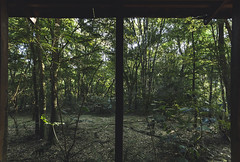 Glassless window. (Pablin79) Tags: lush tree treetrunk beech footpath forest green trees summer outdoors wood light natural leaves windows nature cuñapirulodge aristobulodelvalle misiones argentina morning early calm silence