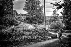 Winding road (Missy Jussy) Tags: windingroad trevorkerr dogwalk dogs pets road trees woodland forest path pylons pole fence grass sky clouds mono monochrome blackwhite bw blackandwhite scene france labrugere saintyrieixlaperche 5d canon5dmarkll canon5d canoneos5dmarkii canon ef70200mmf4lusm