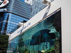 Sony Aquarium 2018 (Yorkey&Rin) Tags: 2018 aquarium august building em5markii ginza japan lumixg20f17 olympus p8260033 people rin sonyaquarium2018 tokyo tropicalfish 夏 銀座 東京 八月