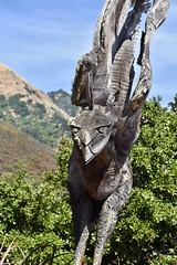 Nepenthe Bird (nick.amoscato) Tags: ca california nepenthe bigsur