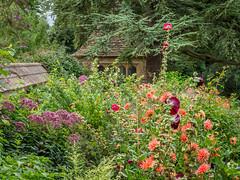 Herbaceous border at Great Chalfield Manor (Bob Radlinski) Tags: cotswoldsbath england europe greatbritain greatchalfieldmanor uk wiltshire travel nationaltrust em1c9779orf