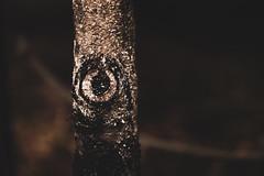 mono-eye (Sign-Z) Tags: nikon d4s 2470mmf28g tree eye 木 目