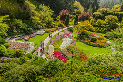 Strolling the Sunken Garden (Explored) (Scottwdw) Tags: britishcolumbia butchartgardens canada flowers garden grass landscape landscaping people summer sunkengarden travel trees vacation victoria nikond750 nikon24120mmf4gedvr park walk walking stroll strolling