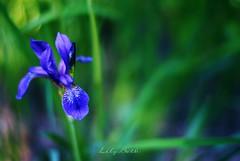 - (-LilyBeth) Tags: nature natura nikon dof depthoffield d3000 wonderfulworld flowers outside bokeh