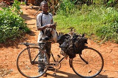 Chicken seller