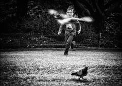 L'ours et les pigeons... / The bear and the pigeons... (vedebe) Tags: netb noiretblanc nb bw monochrome humain human people enfant enfants jeux vol pigeon animaux oiseaux ville city street rue urbain urban urbanarte