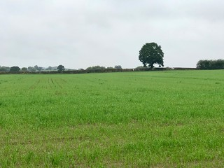 Green fields returning after the hottest Summer on record