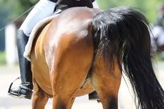 _MG_9743 (dreiwn) Tags: dressurprüfung dressurreiten dressurpferd ridingarena reitturnier reiten reitplatz reitverein reitsport ridingclub equestrian horse horseback horseriding horseshow pferdesport pferd pony pferde tamronsp70200f28divcusd dressur dressuur dressyr dressage