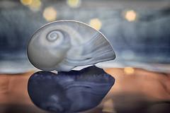 Notturno (bresciano.carla) Tags: industar61lz2850 pentaxk500 seashell star bokeh vintagelens