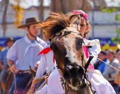 Desfile Farroupilha V (crismdl) Tags: 20 de setembro 20desetembro gaúcho gaucho bagé rs riograndedosul farroupilha revoluçãofarroupilha cavalo cheval horse tradição cavalgada parade feriado holiday liberdade liberté fraternité igualité igualdade fraternidade