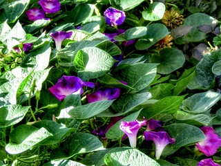 Purple Flows