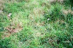 Weeds! (Matthew Paul Argall) Tags: canonsnappy20 fixedfocus 35mmfilm ultramax 400isofilm kodakultramax400 weeds plant plants tag