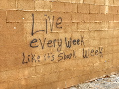 Shark Week (clarkcg photography) Tags: wall wednesdaywalls sharkweek words wisdom graffiti blocks