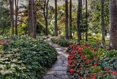 Live the life you have imagined. (BreezyWinter) Tags: minnesota munsingergardens path garden pines park