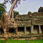 Tree overgrowing the Preah Khan temple ruins in Angkor Archeological Park near Siem Reap, Cambodia thumbnail