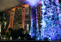 Supertree Grove & Marina Bay Sands at Night, Singapore (JH_1982) Tags: supertree supertrees grove gardens bay nature park tree trees structures engineering architecture plants vertical garden 濱海灣花園 ガーデンズ・バイ・ザ・ベイ 가든스 바이 더 베이 сады залива marina sands resort hotel casino 濱海灣金沙酒店 マリーナベイ・サンズ 마리나 샌즈 марина бей сэндс cityscape city urban urbanity skyscrapers skyscraper highrises highrise buildings building lights light leuchten dunkel dark darkness nacht night nuit noche notte 晚上 夜 ночь beleuchtet beleuchtung lumière luz 光 свет evening singapore singapur singapour singapura 新加坡 シンガポール 싱가포르 сингапур