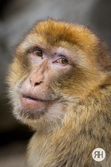 Monkey Business (RonHui) Tags: ouwehands zoo animals dier beest dieren dierentuin