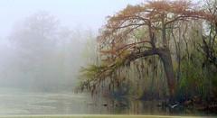 foggy-swamp (tanyapavlicapschyrembel) Tags: