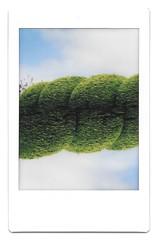 Glen Vine garden (iampaulrus) Tags: instax fujifilm instaxmini instantfilm polaroid isleofman paulfargher paulfargherphotography film 35mmfilmphotography film35mm analog analogue bush garden doubleexposure multipleexposure splitzer lomoinstantsquare lomography