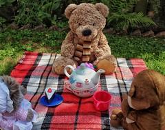T For Teddy bear's picnic! 😊 (LeanneHall3 :-)) Tags: teddy teddybearspicnic teddies brown fur grey red blanket green leaves garden azchallenge closeup closeupphotography canon 1300d
