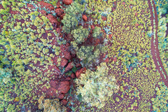 Pilbara Colours 3 (Latitude 33 Photography) Tags: tree plants colour travel australia aerial