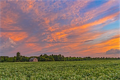 Midwest Country (Daniel000000) Tags: wisconsin farm sky sunset clouds art new old green orange blue color nikon dslr field tree trees cloud sunsets landscape