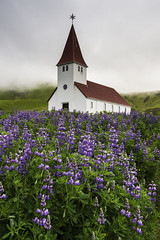Vik Church (Longleaf.Photography) Tags: vik lupine church god scenic iceland flowers