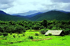 "Chiang Mai Province. (ol'pete) Tags: weather อากาด august สิงหาคม จ้งหวัดเชียงใหม่ chiangmaiprovince จอมทอง chomtong ชนบท countryside ดอยหล่อ doilo ทุ่งนา farm fields ประเทศไทย thailand เมืองไทย ""canoneos350d"" ""efs1855mm"" earthasia"
