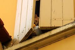 Curiosity (Alfredo Liverani) Tags: 2312018 project365231 project365081918 project36519aug18 oneaday photoaday pictureaday project365 project project2018 2018pad 7dayswithflickr 7dwf fauna canong5x canon g5x pointandshoot point shoot ps flickrdigital flickr digital camera cameras cat window wood
