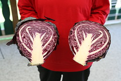 our red cabbage, halved (Yutaka Seki) Tags: redcabbage purplecabbage gardening garden harvest leaves leafy vegetable veggie crisp head