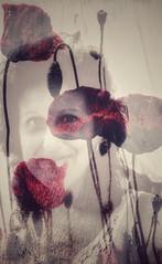 SOY... (elena m.d.) Tags: dobleexposicion amapolas selfie retrato rojo new macromondays 7dwf elena nikon d5600