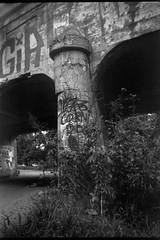 crumbling pillar, railroad bridge, graffiti, Emma Road, French Broad River, Asheville, NC, Ansco Sure Shot, Arista.Edu 200, Kodak TMAX developer, 9.5.18 (steve aimone) Tags: pillar bridge railroadbridge crumbling urbandecay frenchbroadriver asheville northcarolina anscosureshot aristaedu200 kodaktmaxdeveloper 6x9 boxcamera mediumformat monochrome monochromatic blackandwhite 120 120film film graffiti