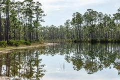 Everglades National Park (DanGarv) Tags: d810 florida everglades evergladesnationalpark nationalpark evergladesnp