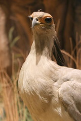 Birdie (Itinerant Wanderer) Tags: delaware newcastlecounty delawaremuseumofnaturalhistory