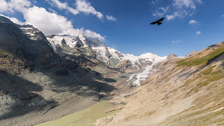Red-billed Chough at the Pasterze Glacier