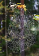 Spider Web (andreivolkov) Tags: nature forest landscape spider web green canon