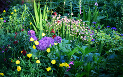 May in the Garden (Mark Wordy) Tags: mygarden flowers alliums welshpoppies astrantia
