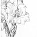 Gladiolus by Julie de Graag (1877-1924). Original from the Rijks Museum. Digitally enhanced by rawpixel.