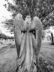 Guardian Angel (RichardK2018) Tags: zuiko714mmf28 olympusem1mk2 monochrome masonry frombehind nottingham rockcemetery cemetery graveyard angel creepy