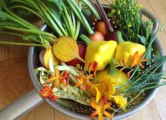 Garden Veggies (wishingflowerdolls) Tags: garden grown vegetables veggies beets yellowbeans carrots