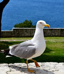 bird (jvstynakovalczyk) Tags: bird travel montenegro water white blue green