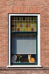 158 - Utrecht (Alessandro Grussu) Tags: leica m9 telemetro rangefinder messsucher olanda holland paesi bassi netherlands niederlande nederland città city stadt utrecht gatto cat katze finestra window fenster