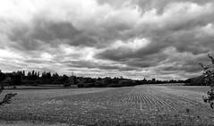 Stormy Sky In Black & White (Martin Pettitt) Tags: 2018 appleiphone6s burystedmunds clouds field iphone outdoor september sky smartphone storm suffolk summer uk bw monochrome