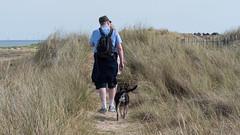 064-P1030849 LR (1gl) Tags: 2018 carpet carpets killer gumbo norfolk wintertononsea beach dogs coast
