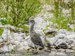 DSCN2020 (jocassidy121) Tags: nikon missouri outside creekside creeks countryside nature birds water