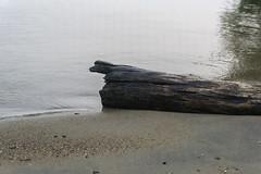 Forgotten Log (Alex Luyckx) Tags: lanternbayresort lanternbay morrisonlake lake retreat water summer cottage campfire friends social gravenhurst ontario canada muskoka cottagecountry sony sonya6000 sonyepz1650mm13556oss