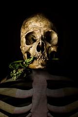Fred (DanGarv) Tags: d810 skull portrait