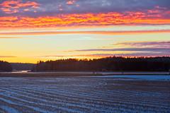 _7501947 copy.jpg (larssteenberg) Tags: platser hossonja oxnö landsakp lottastjejer fåglar gålö vinter stockholm people