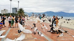 Doves and newlywed couple (hoangbinhboong) Tags: vietnam danang đànẵng seashore doves seagulls birds married couple